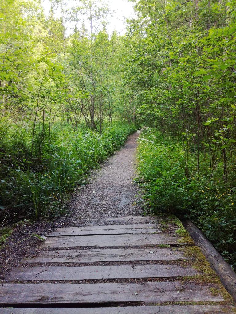 Metsäfiilistelyretki: hyvinvointia luonnosta